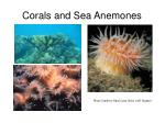 corals and sea anemones