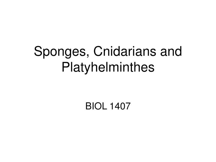 sponges cnidarians and platyhelminthes