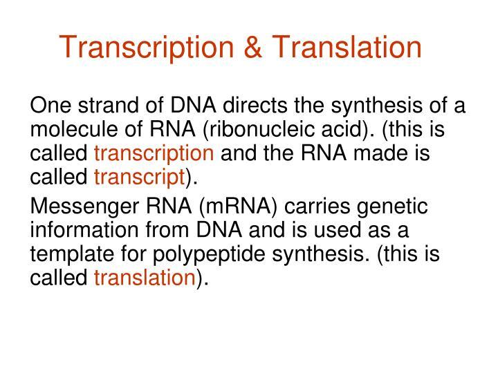 Transcription & Translation