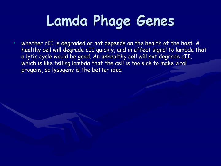 Lamda Phage Genes