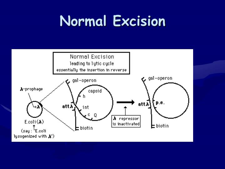 Normal Excision