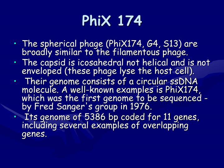 PhiX 174