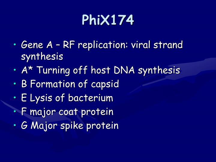 PhiX174