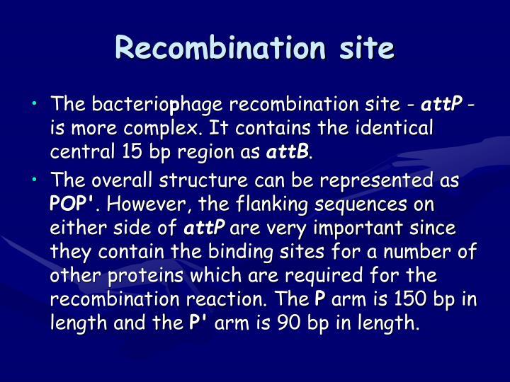 Recombination site