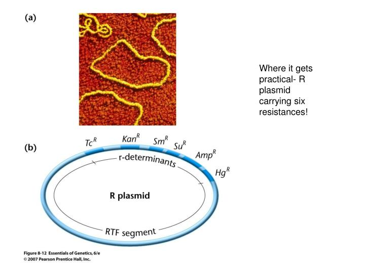 Where it gets practical- R plasmid carrying six resistances!