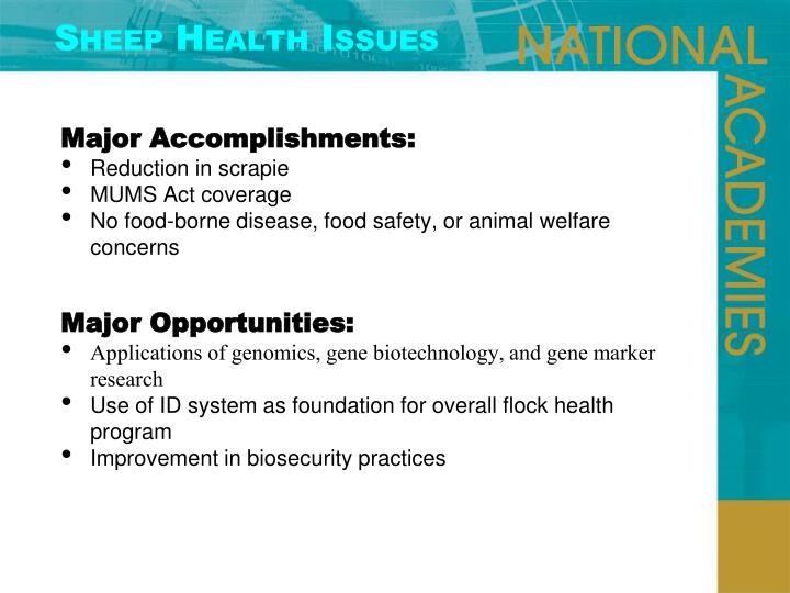Sheep Health Issues