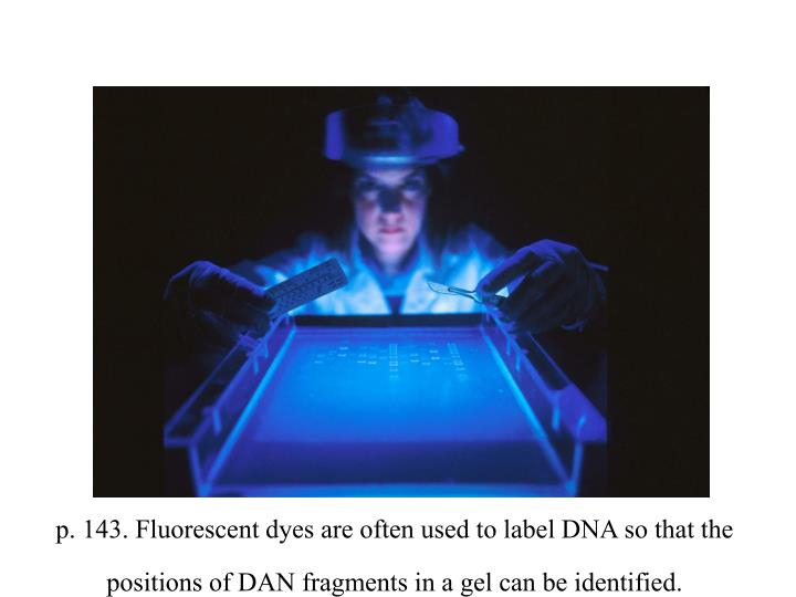 p. 143. Fluorescent dyes are often used to label DNA so that the positions of DAN fragments in a gel can be identified.