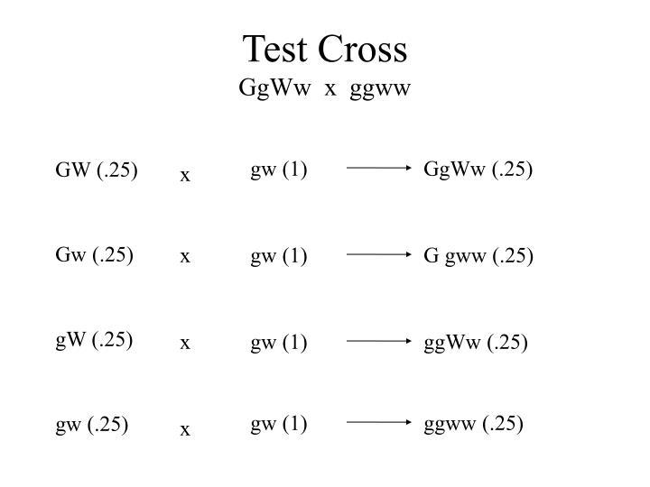 GW (.25)
