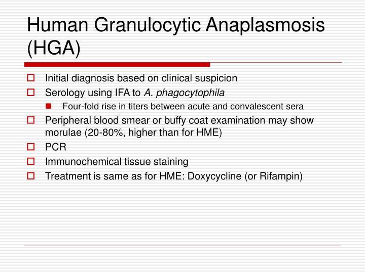 Human Granulocytic Anaplasmosis (HGA)