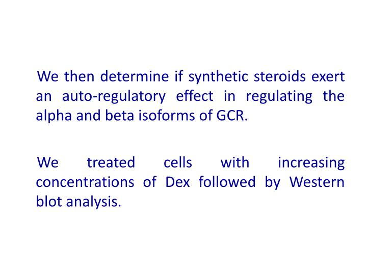 We then determine if synthetic steroids exert an auto-regulatory effect in regulating the alpha and beta isoforms of GCR.