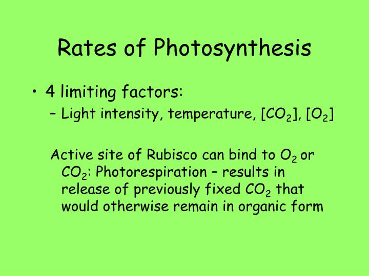 Rates of Photosynthesis