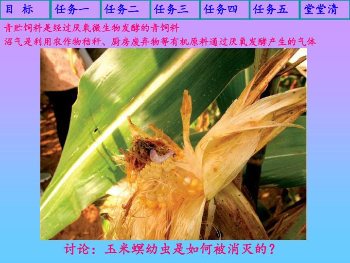 青贮饲料是经过厌氧微生物发酵的青饲料