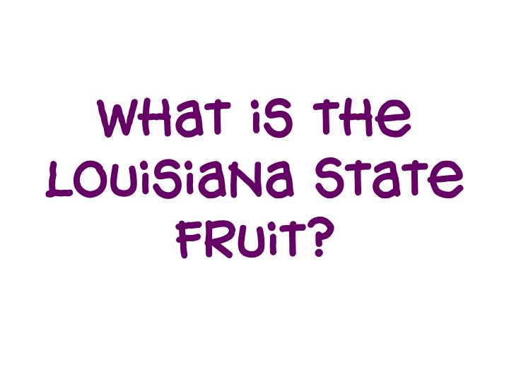 What is the Louisiana State fruit?