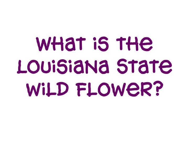 What is the Louisiana State wild Flower?