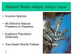hemlock woolly adelgid adelges tsugae