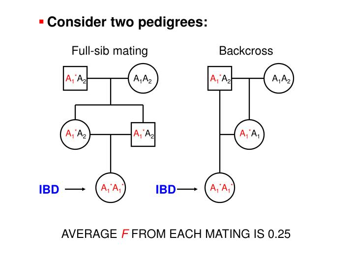 Consider two pedigrees: