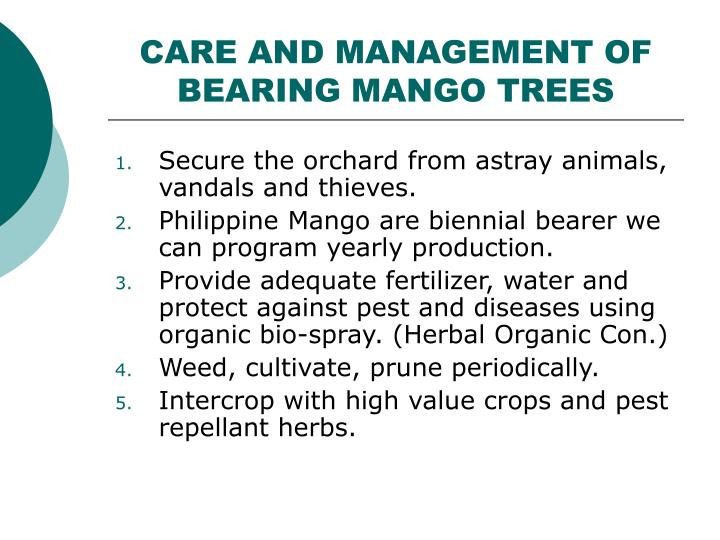 CARE AND MANAGEMENT OF BEARING MANGO TREES
