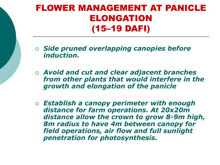 FLOWER MANAGEMENT AT PANICLE ELONGATION