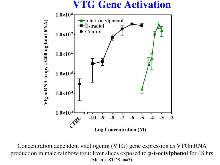 Concentration dependent vitellogenin (VTG) gene expression as VTGmRNA production in male rainbow trout liver slices exposed to