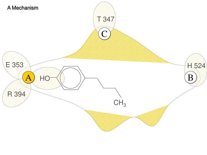 A Mechanism