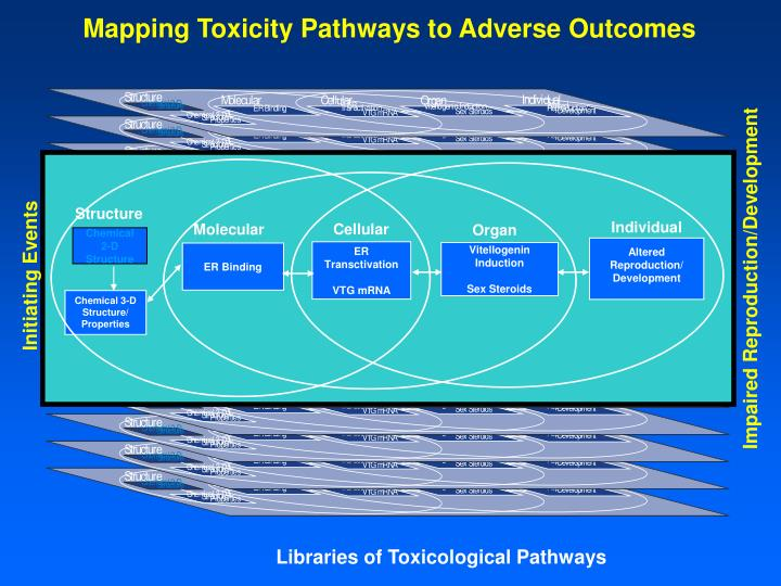 Mapping Toxicity Pathways to Adverse Outcomes