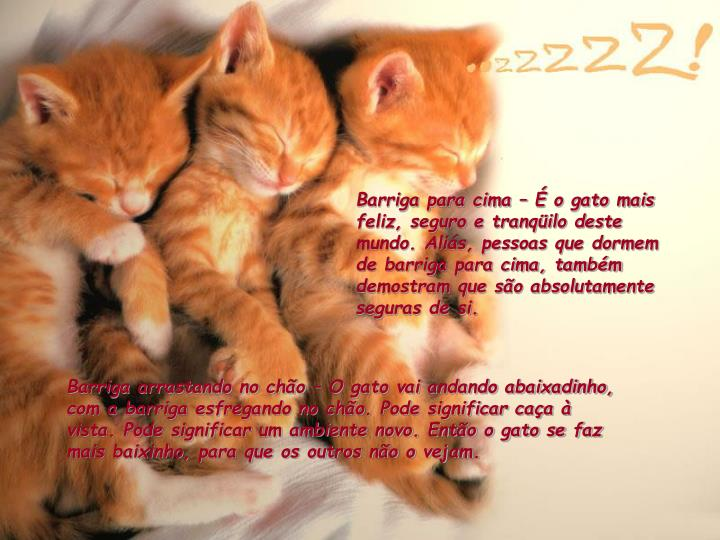 Barriga para cima – É o gato mais feliz, seguro e tranqüilo deste mundo. Aliás, pessoas que dor...