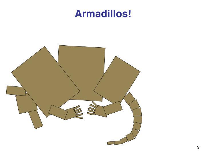 Armadillos!
