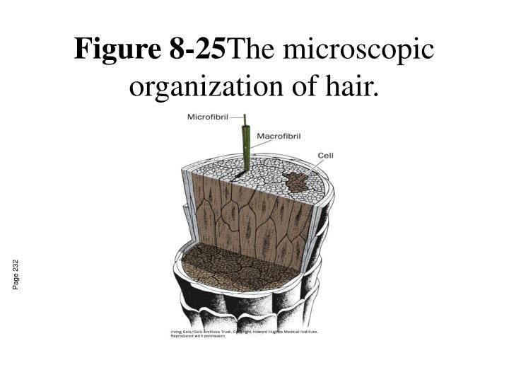 Figure 8-25