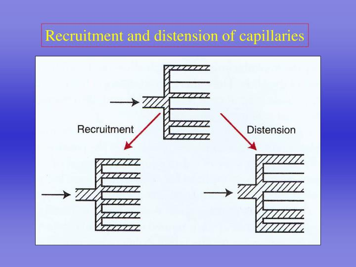 Recruitment and distension of capillaries