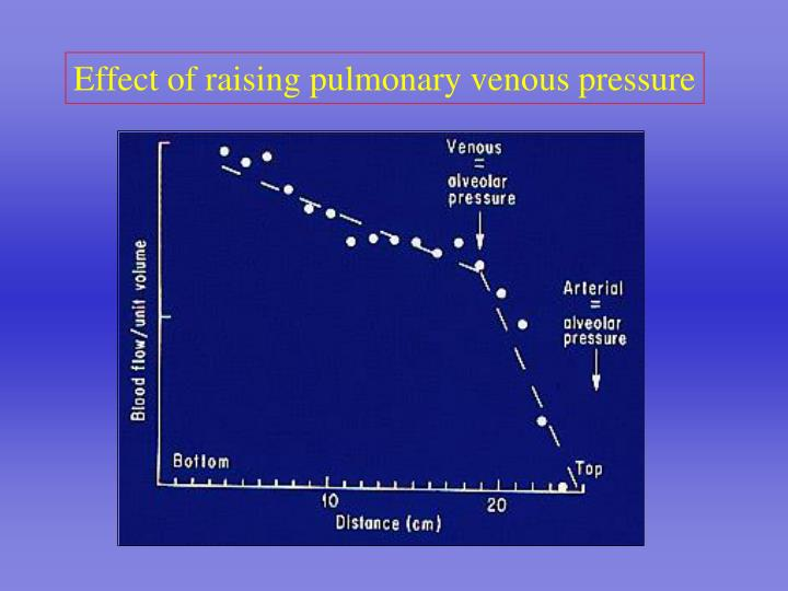 Effect of raising pulmonary venous pressure