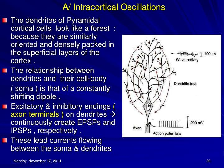 A/ Intracortical Oscillations