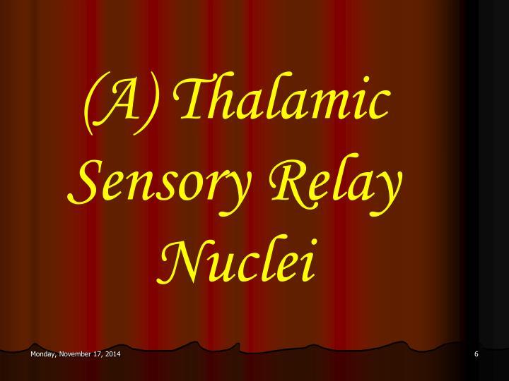 (A) Thalamic Sensory Relay Nuclei