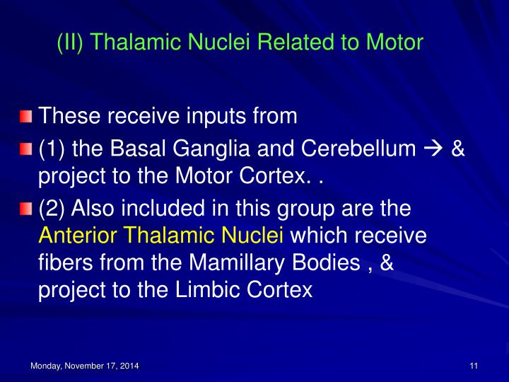 (II) Thalamic Nuclei Related to Motor