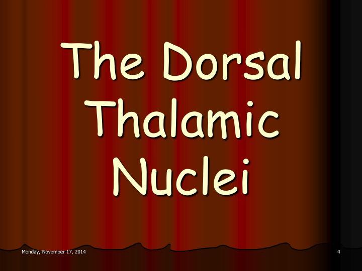 The Dorsal Thalamic Nuclei