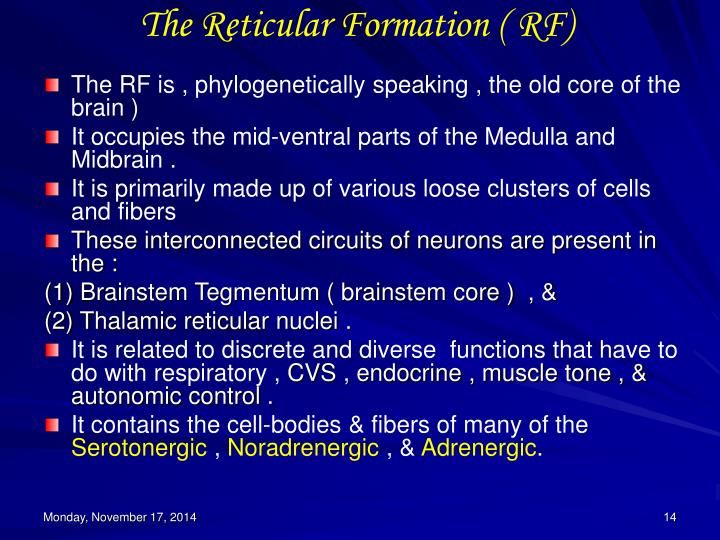 The Reticular Formation ( RF)
