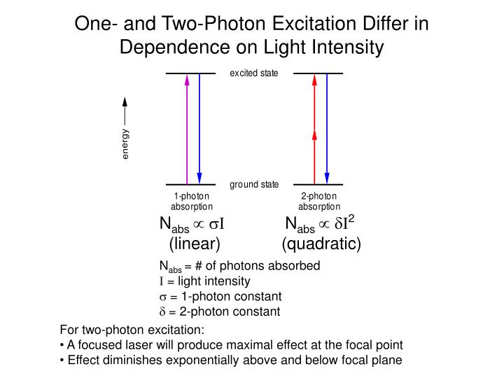 One- and Two-Photon Excitation Differ in Dependence on Light Intensity