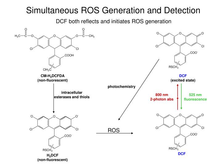 Simultaneous ROS Generation and Detection