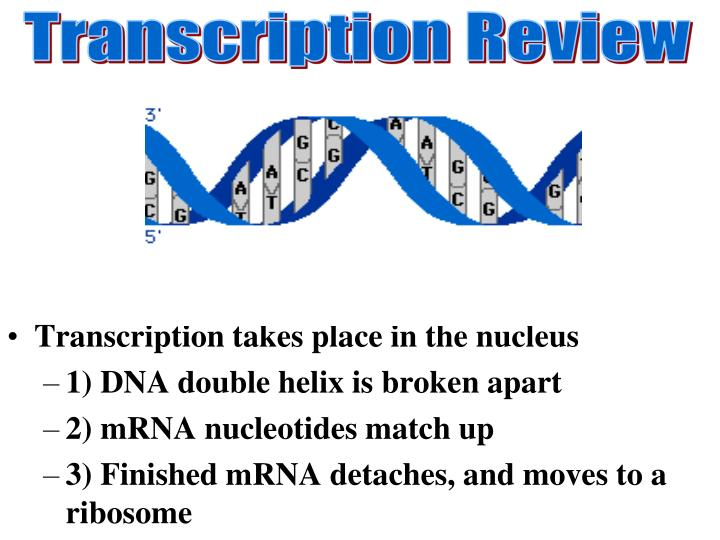 Transcription Review