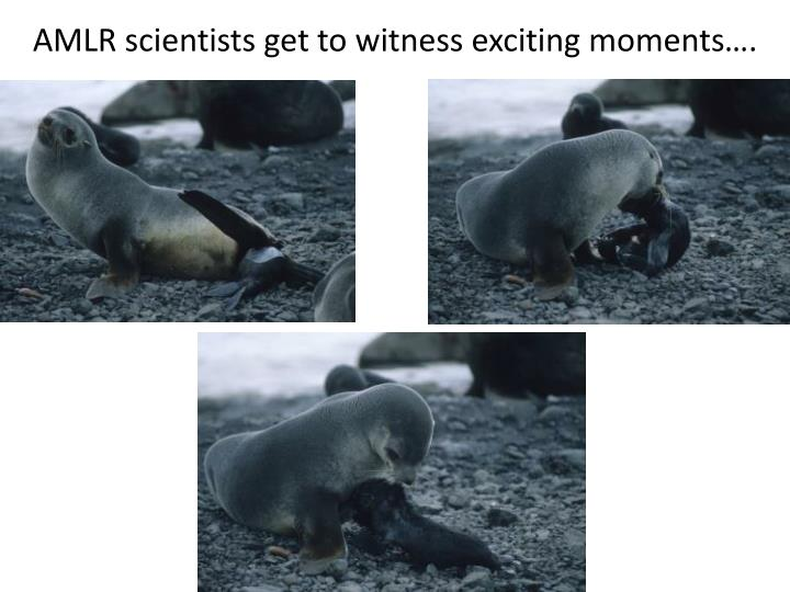 AMLR scientists get to witness exciting moments….