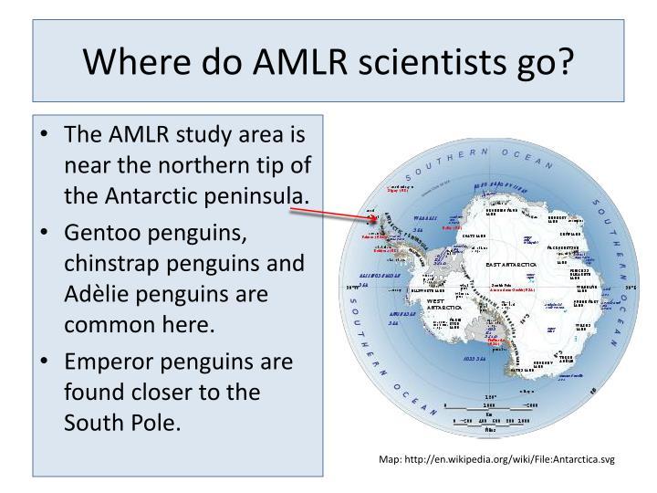 Where do AMLR scientists go?