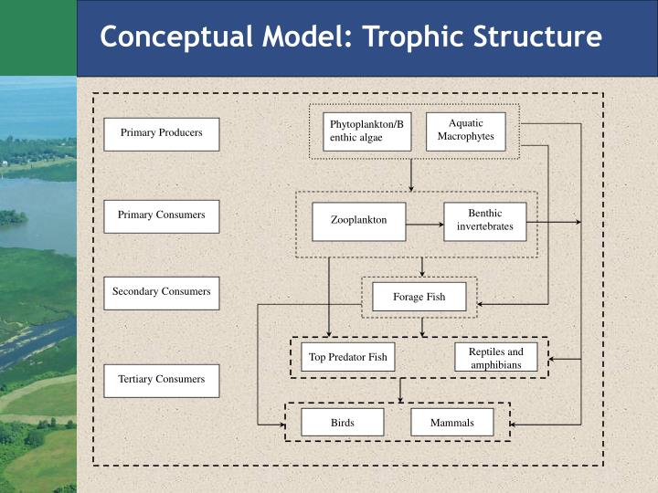 Conceptual Model: Trophic Structure