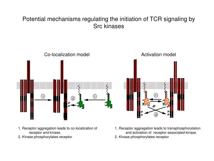 1. Receptor aggregation leads to co-localization of receptor and kinase.