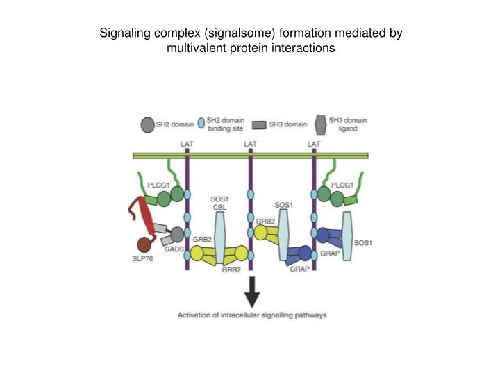 Signaling complex (signalsome) formation mediated by multivalent protein interactions
