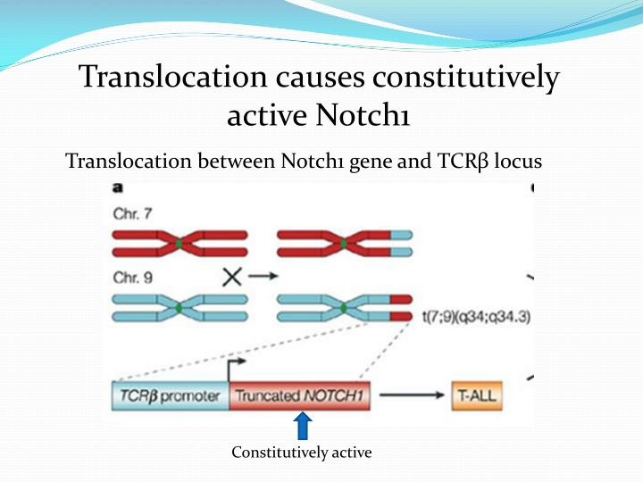 Translocation causes constitutively active Notch1