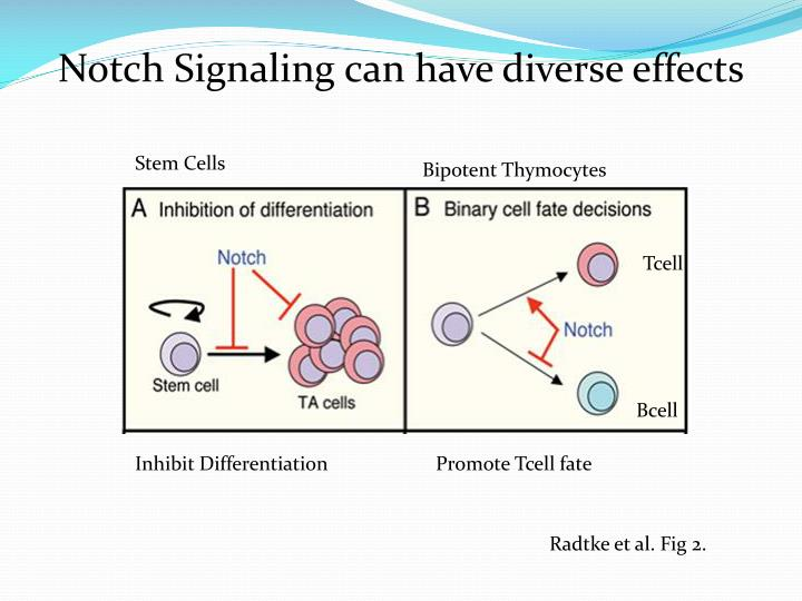 Notch Signaling can have diverse effects