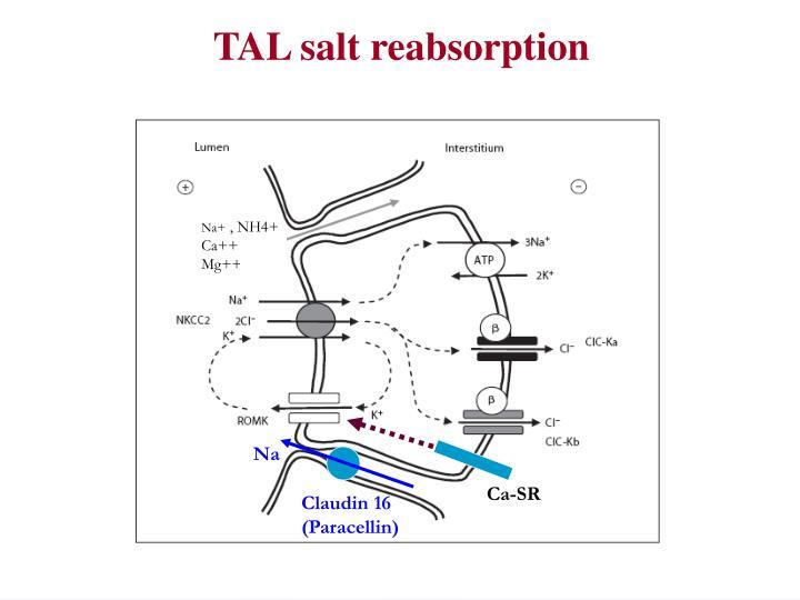 TAL salt reabsorption