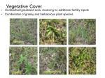 vegetative cover