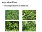 vegetative cover1
