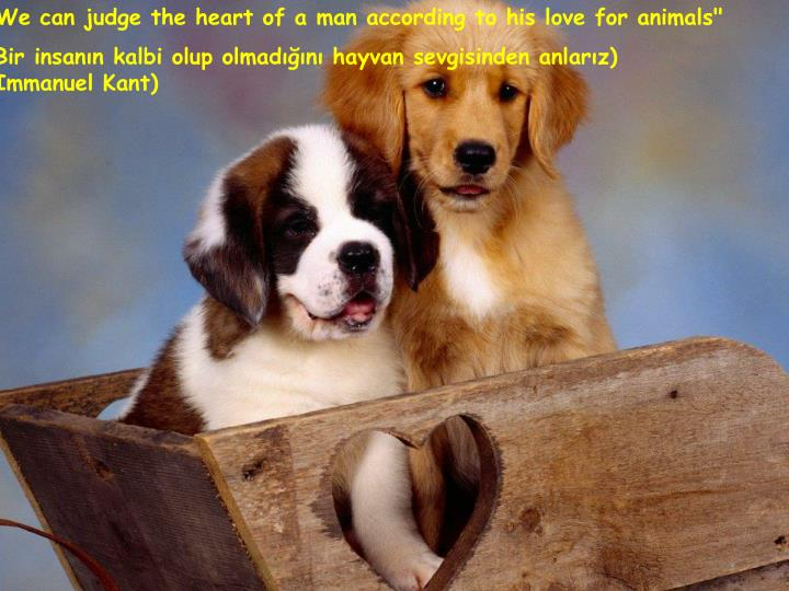 """We can judge the heart of a man according to his love for animals"""