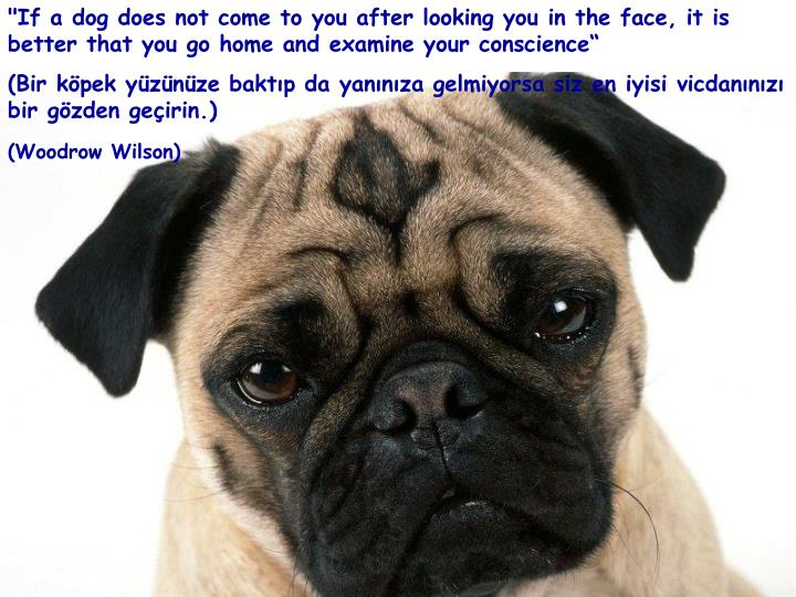 """If a dog does not come to you after looking you in the face, it is better that you go home and examine your conscience"""